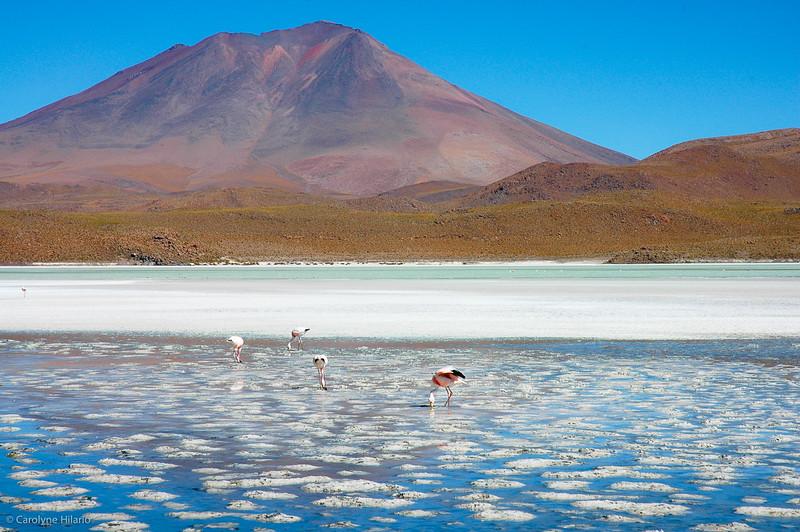Laguna Canapa<br /> Salar de Uyuni (Uyuni Salt Desert)