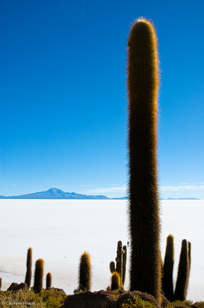 Isla del Pescado<br /> Salar de Uyuni
