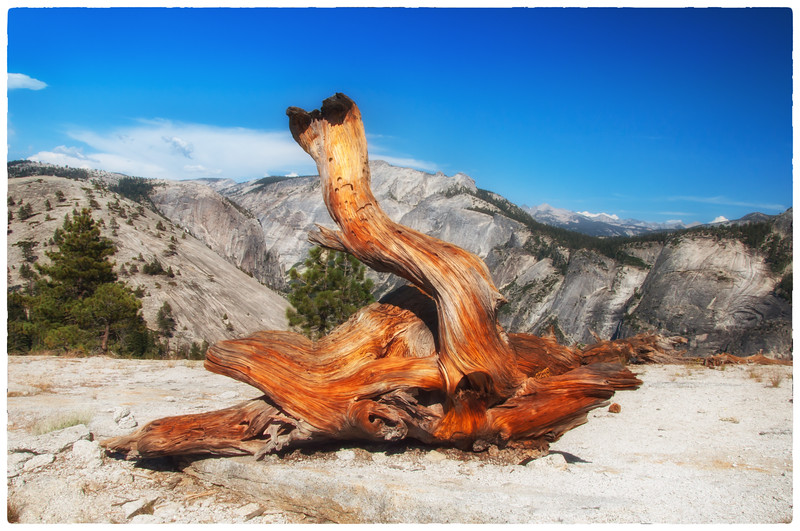 TWISTED PINE #4