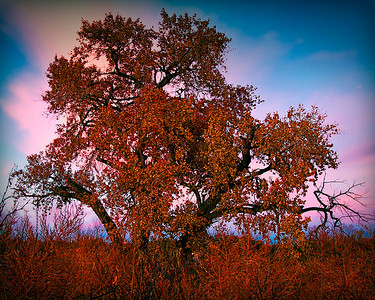 TREE during sunset BOSQUE - DECEMBER 2010