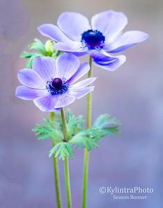 Blue Flowers 55