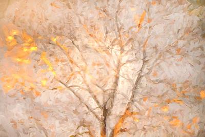 Treetop 952
