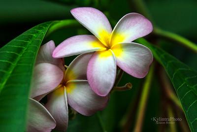 Flower 181