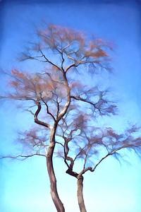 Treetops 911