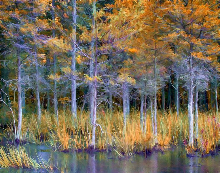 Piney Swamp 476