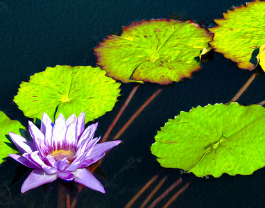Purple Lily Stretch 348