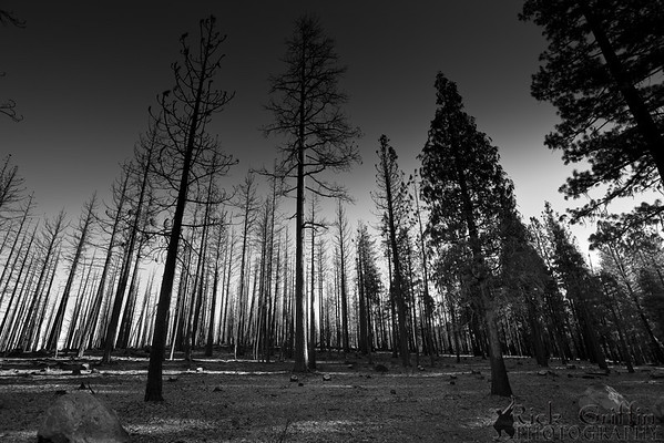 Lassen National Forest, California