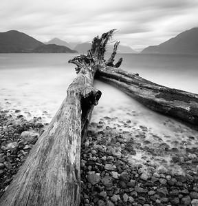 Fallen Trees, Hood Point