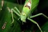 Leaf Bug 3