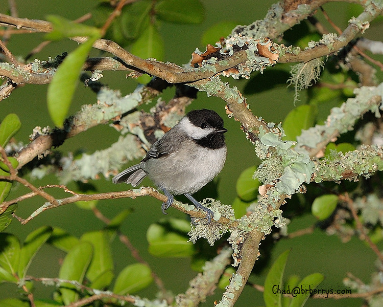 B&W Small Bird