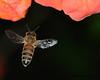 Flying Bee 1