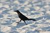 BeachBird