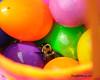 Bee Eggs