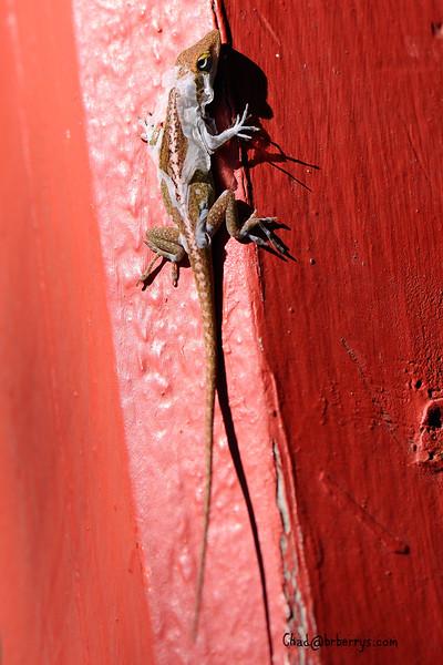 Shedding Lizard 1