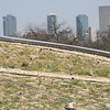 BRIT's living roof with the Fort Worth skyline in the background.