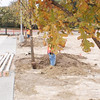 Oct. 22, 2010: Light poles and trees are being set and planted. The tree in the foreground is a Burr Oak from Erath County - now changing color.