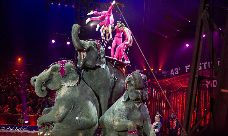 Gärtners elefanter
