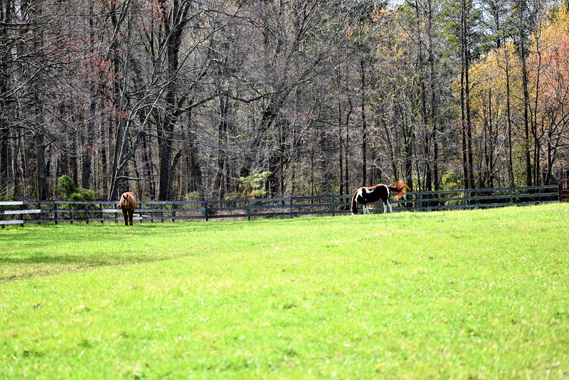 The horses will enjoy their neighbors tonight.