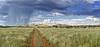 Tswalu Rain -- Kalahari