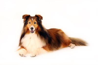 Pet Portraits Pet Photography