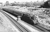 80083 Pokesdown 14th July 1966 Eastleigh-Bournemouth service