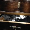 Pinky in dresser drawer 1-15-16