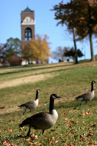 Fall Campus Shots; 2008