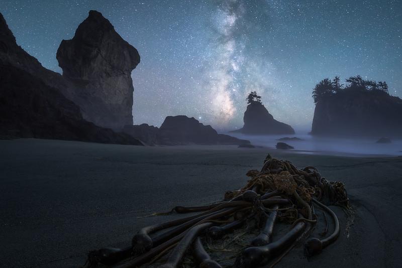 BTP: Cosmic Kelp