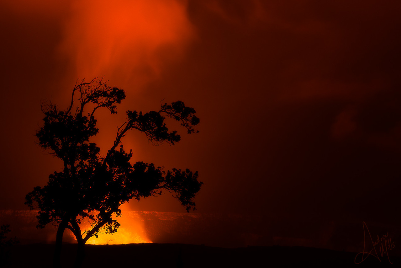 Tree Silhouetted in the Caldera