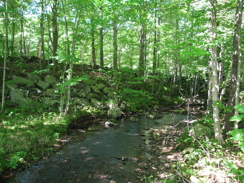 57 Stream Near Treehouse