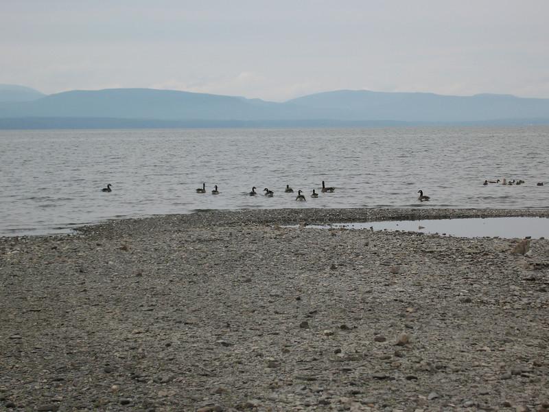35 Geese and the Adirondacks I