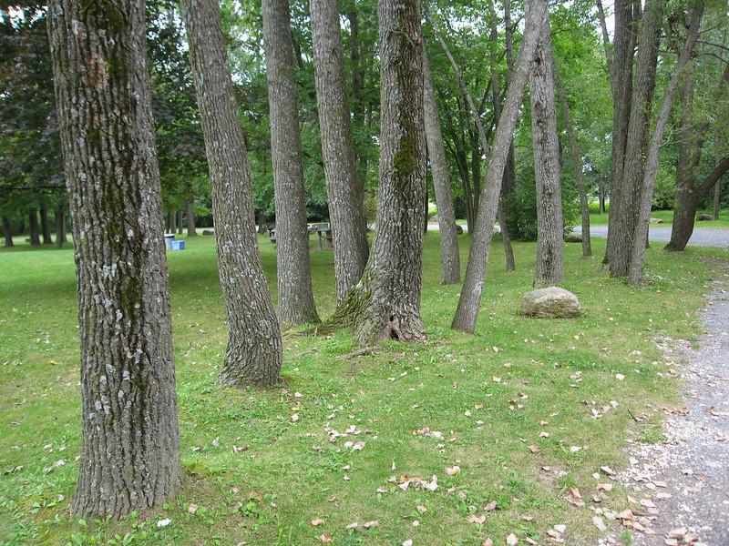 72 Grove of Ash