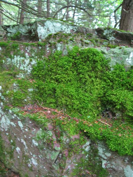 32 Mossy Rock Detail II