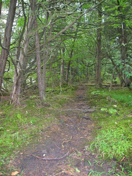 73 Rustic Trail II