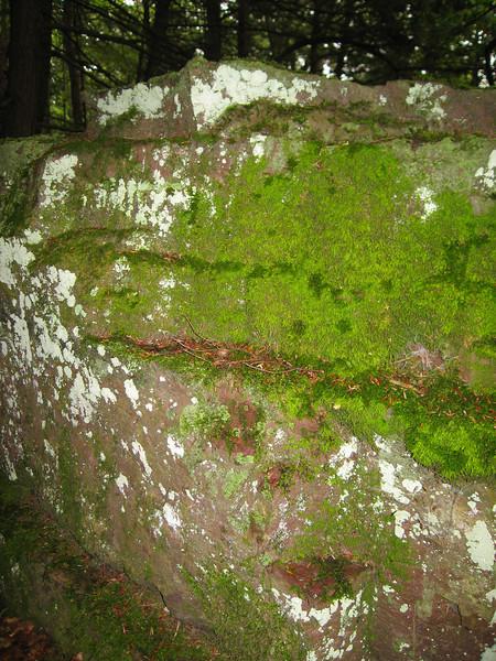 31 Mossy Rock Detail I