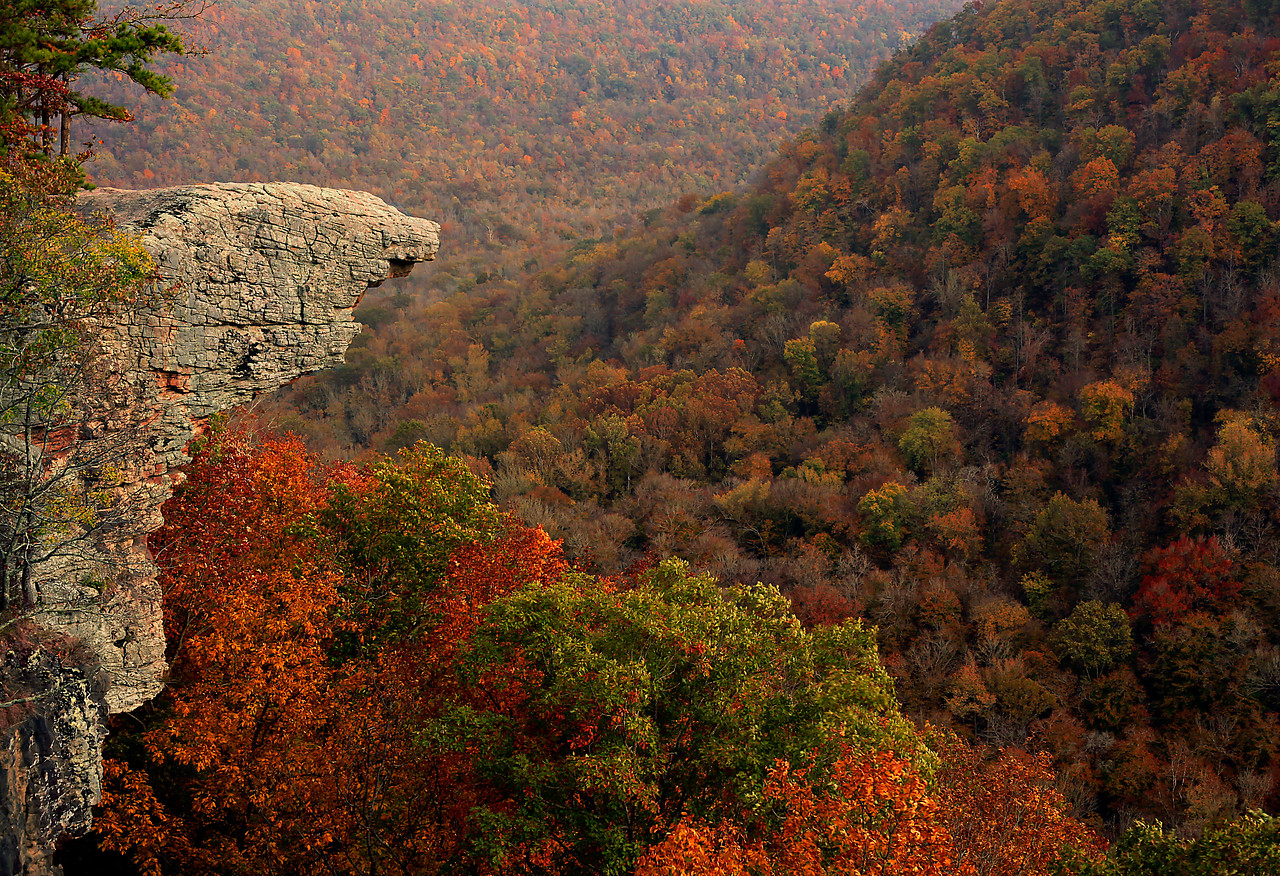 BEAUTIFUL FALL COLORS AT HAWKSBILL CRAG - BUFFALO RIVER