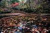 Falling Water Creek - Fall - Richland Creek Area - Ozark National Forest