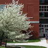 Spring at W&L: The Science Center addition behind dogwoods in bloom.