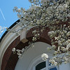 Spring blooms at the rotunda of Gaines Hall.