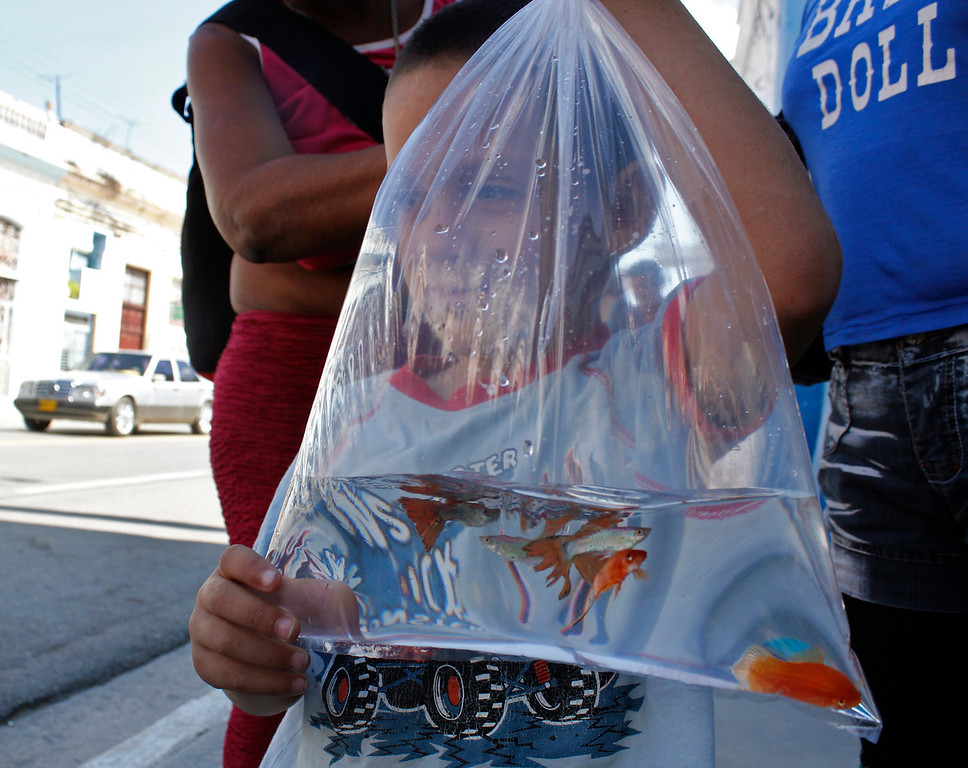 A boy holds up a bag of goldfish on Cardenas, Cuba on March 30, 2013. Photo by Stacey Rupolo/ BU News Service.