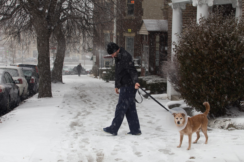 Febrary 8, 2013 - A dog resists going back inside as the blizzard began to hit the Allston/Brighton area of Boston on Friday afternoon. Photo by Alexa Gonzalez Wagner.