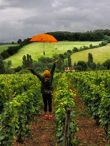 Umbrella in the wine fields of Burgundy