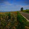 Road near Vitteaux