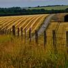 July fields in Burgundy