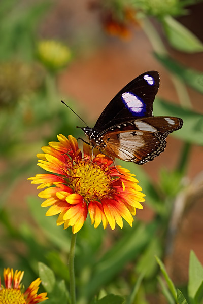 Diadem on a Flower / Диадема на цветке