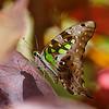 A Fairytale Moment — Graphium Agamemnon butterfly / Мгновение сказки