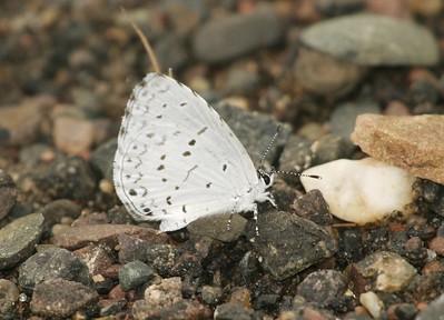 azure, Spring (B) SS 522_2285