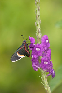 J-Butterfly Rancho Casa Grande 823_2351