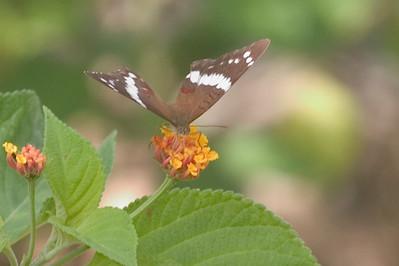 Butterfly 825_2581