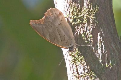 Butterfly 825_2586